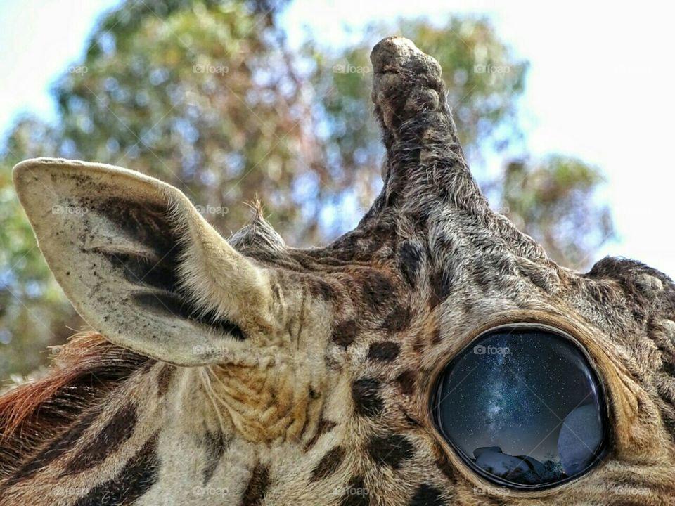 Giraffe and the Milky Way eyes