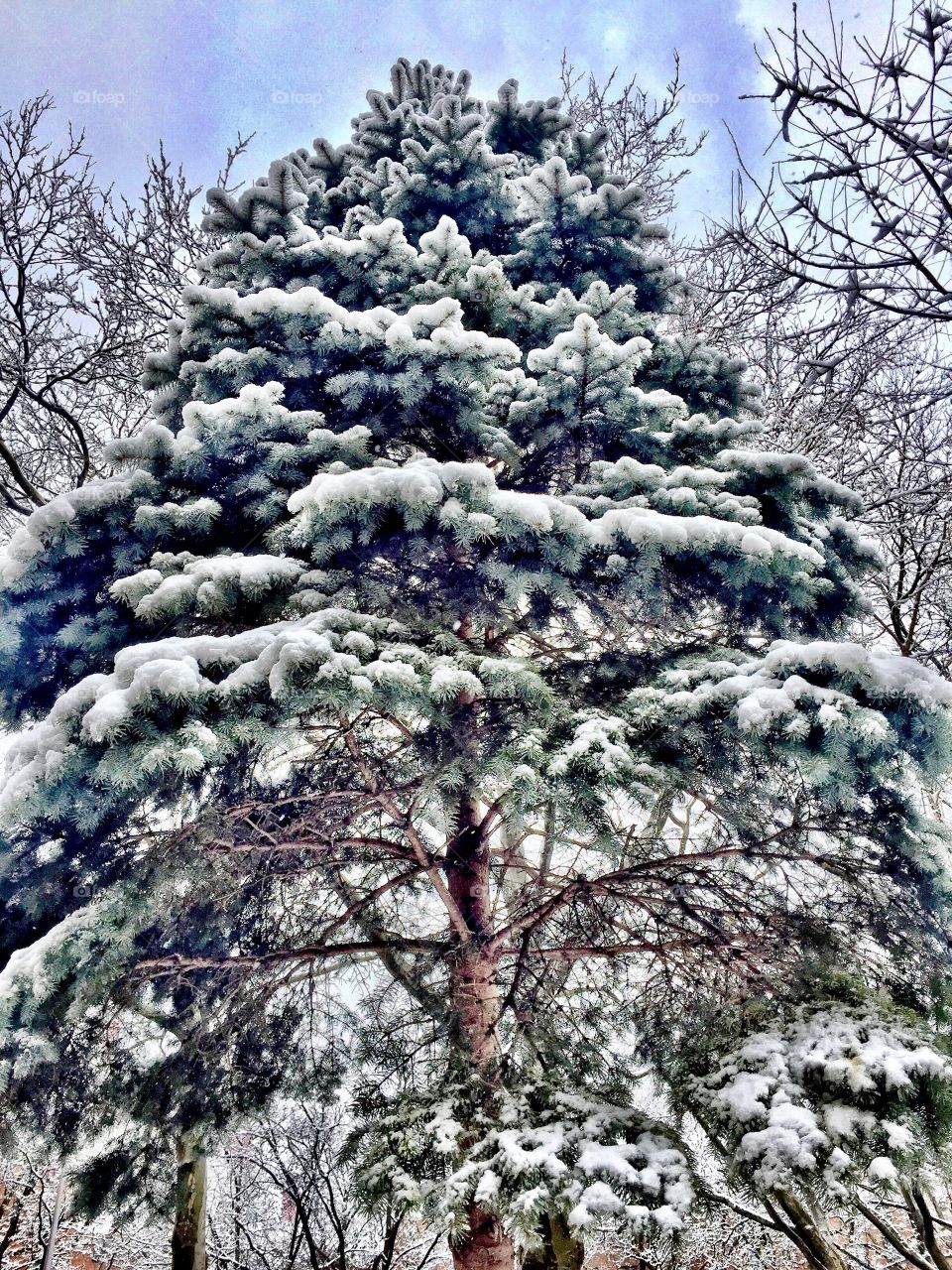 View of snowy tree