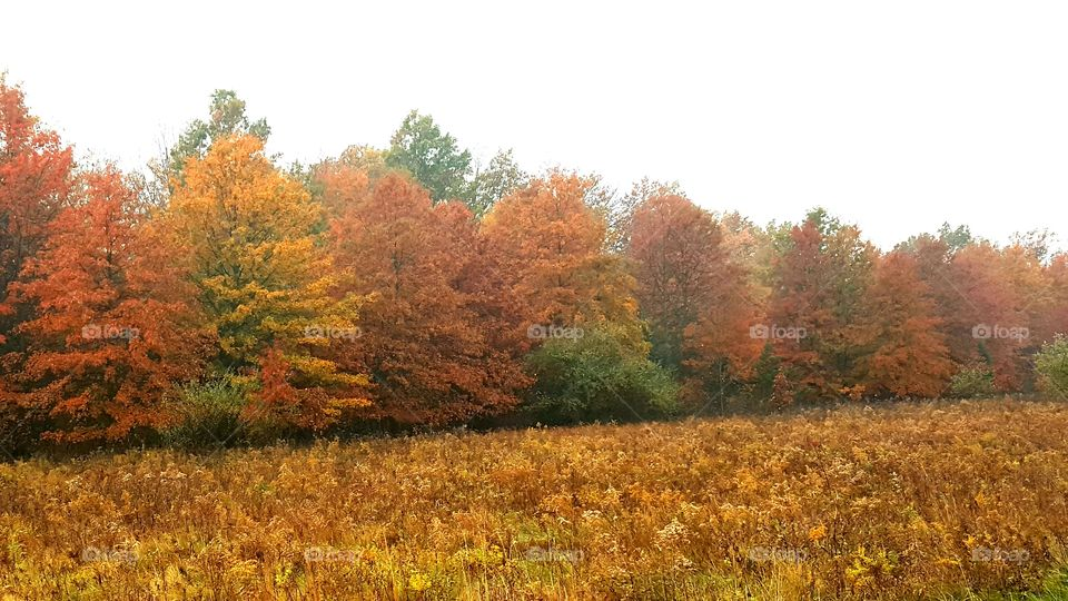 Scenic view of autumn trees on field