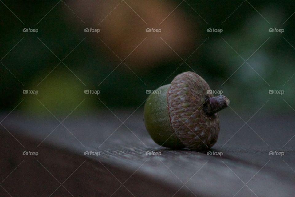 Close-up of acorn