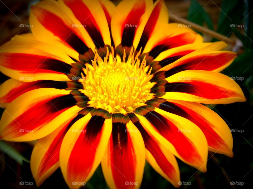 Close-up of a beautiful flower with vivid orange and yellow striped petals.