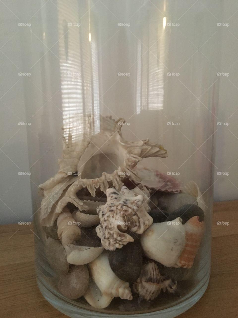 Seashells in glassbowl