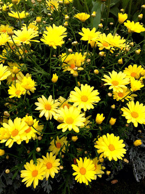 green flowers yellow nature by leta