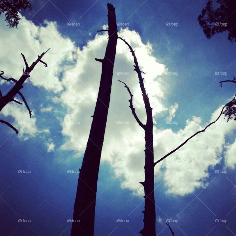 lonley trees