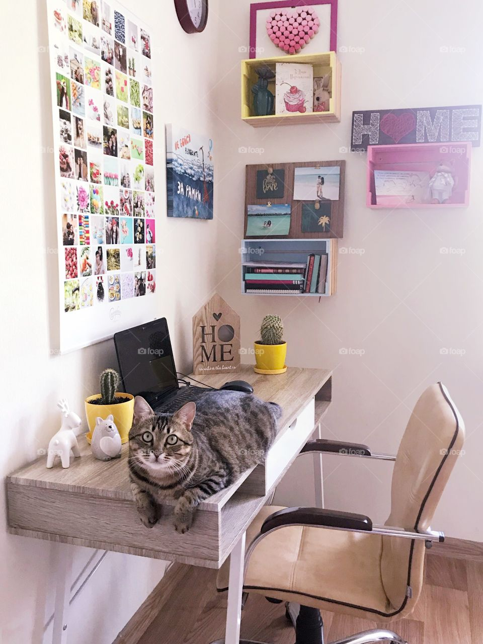 Lovely spot at home. Cozy home. Cat