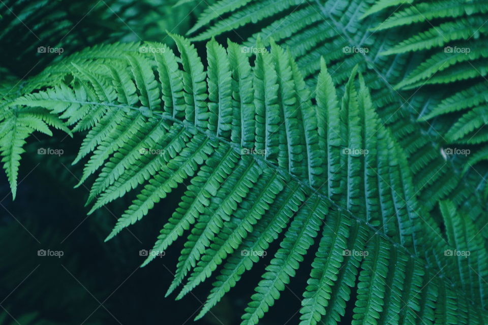 Fern leaves in park