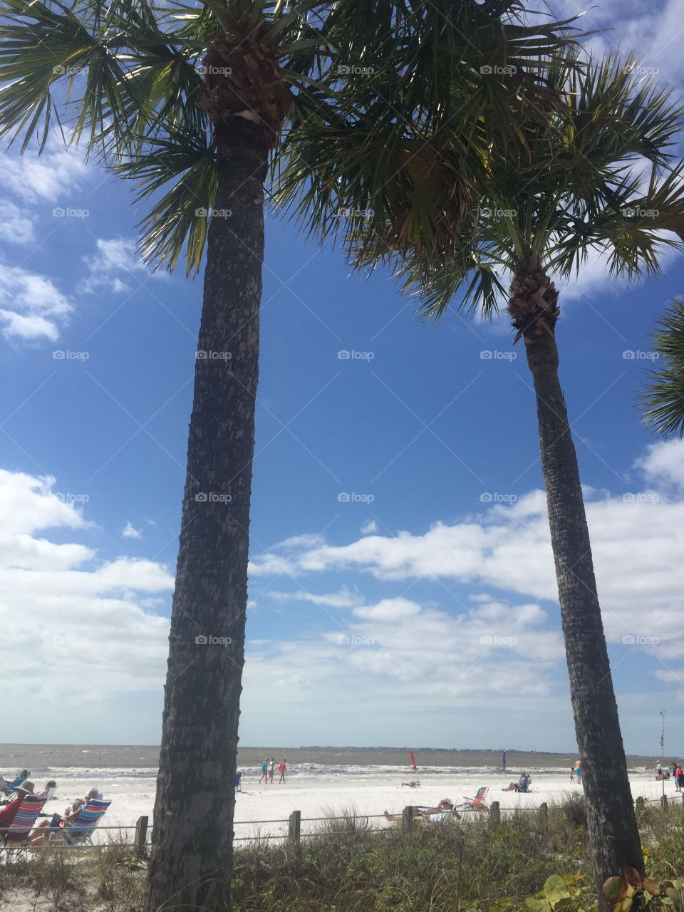 Tree, No Person, Beach, Seashore, Outdoors