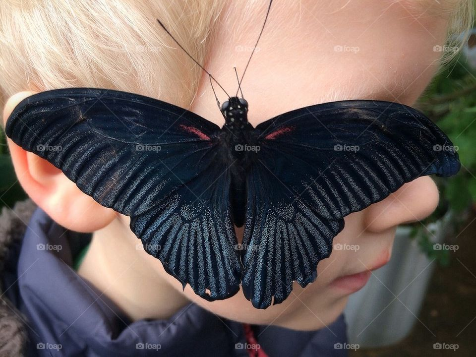 Great Mormon butterfly with new friend