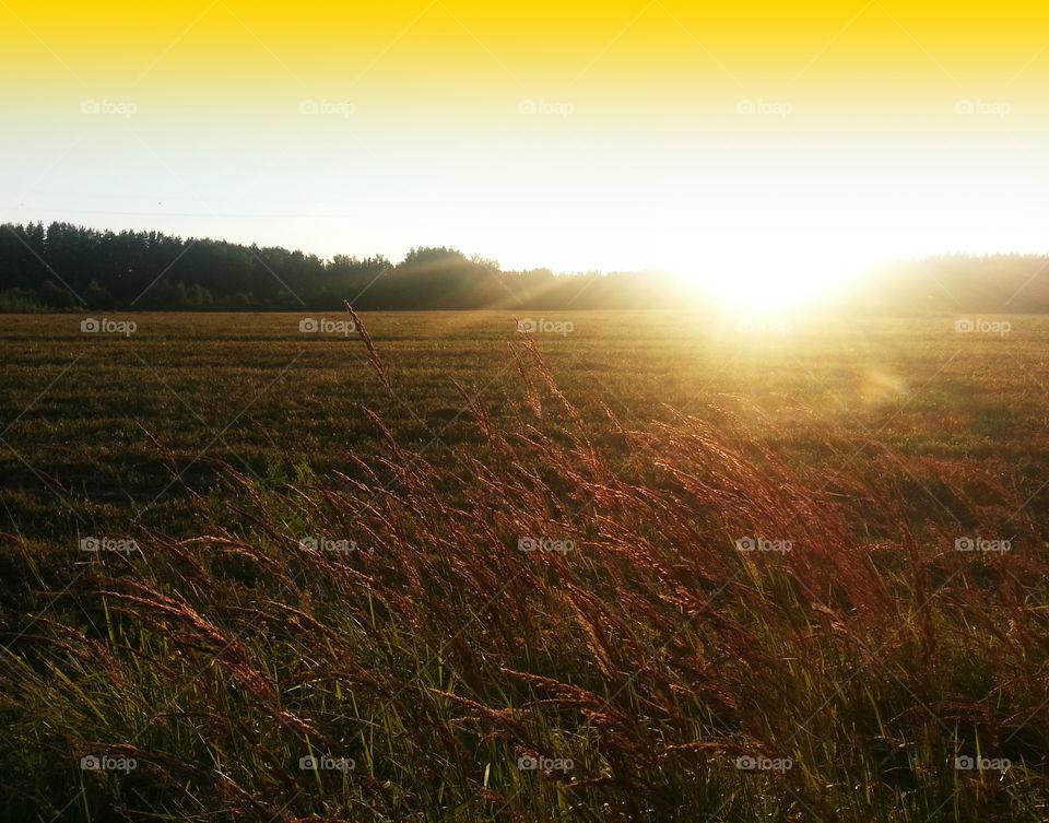 Golden orange sunset on field