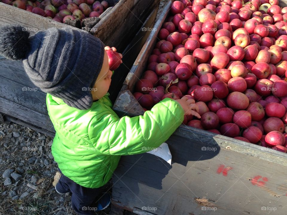 Picking Out Apples