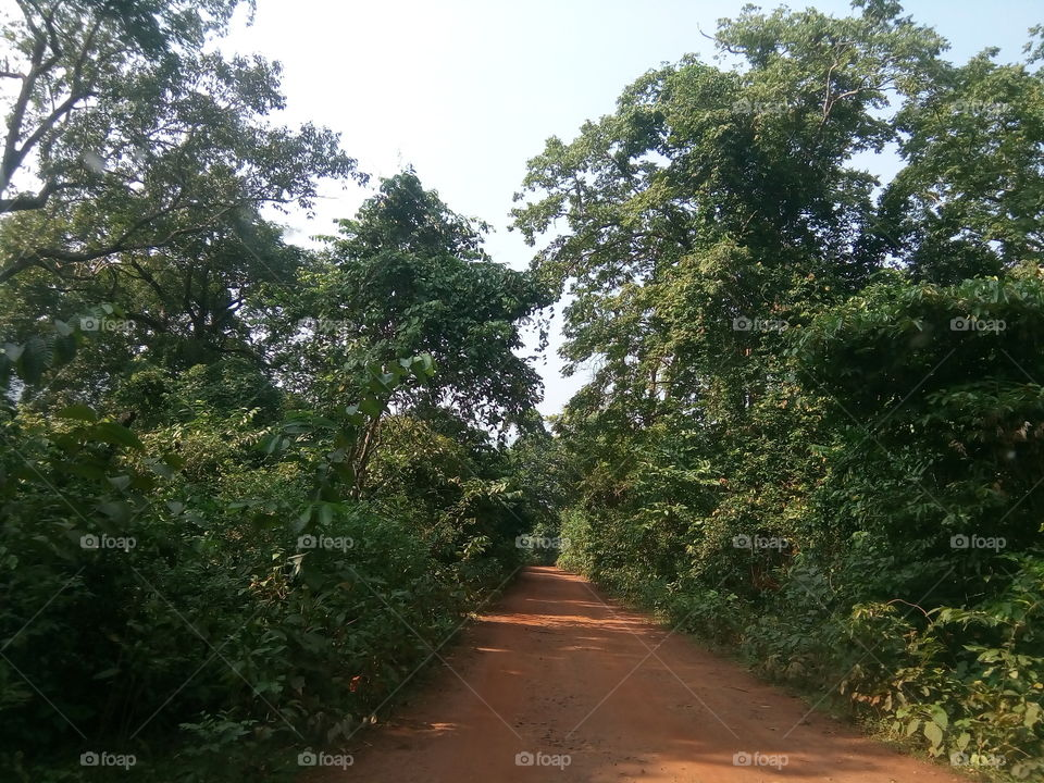 Tree, No Person, Nature, Landscape, Wood